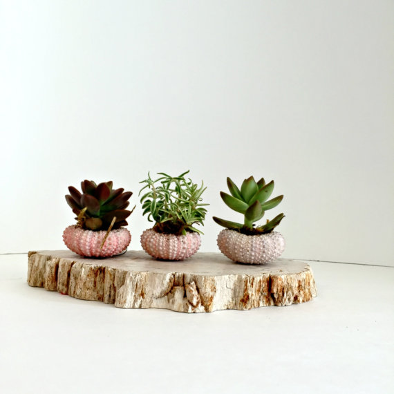 succulent-wedding-centerpiece-wedding-flowers
