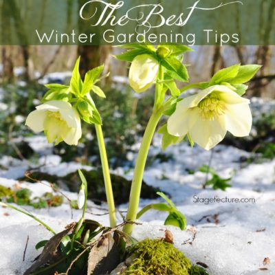 Winter Gardening: The Best Winter Plants and Gardening Tips