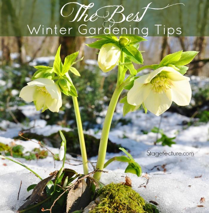 best winter gardening tips