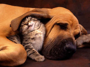 dogs_cat_allergens