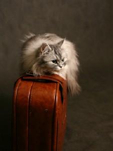 moving_cat