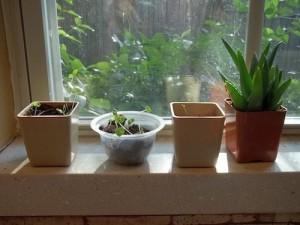 Walmart Del Monte plants window