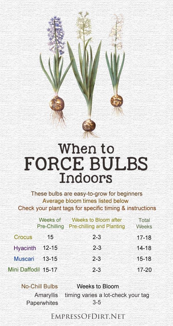 forcing bulbs calendar