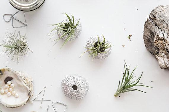 christmas-party-favor-air-plants