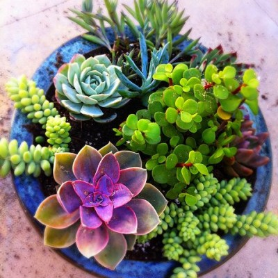 Summer Gardening: How to Propagate Succulents