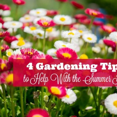 4 Gardening Tips to Help with the Summer Heat