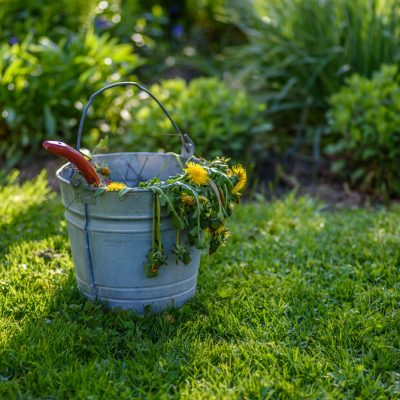 Backyard Makeover Ideas for Spring