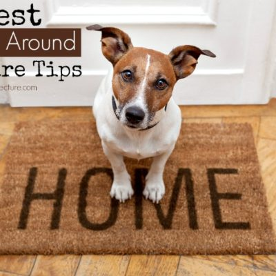 The Best Year-Around Pet Care Tips