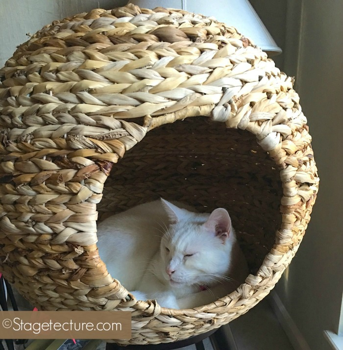 Cat Condo Stagetecture Sauder Home final