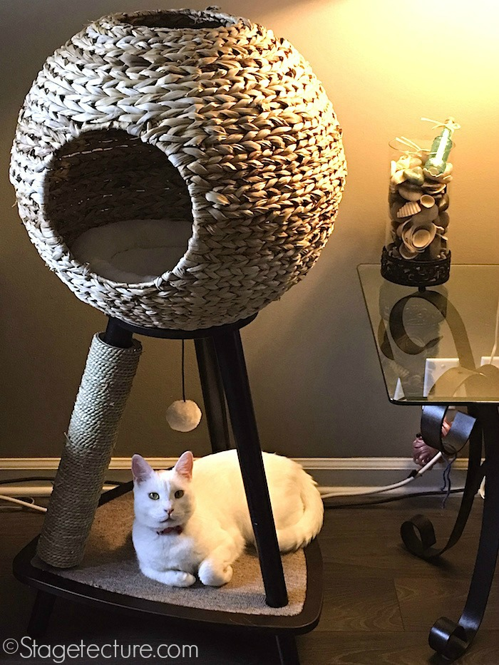 Cat Scratching Post Stagetecture final