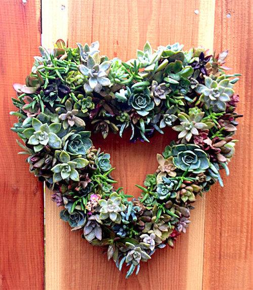 Succulents-Wreath-Kit