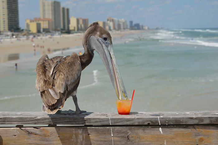 Daytona Beach things to do