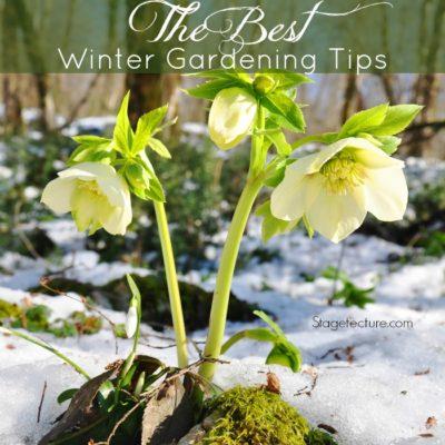 Winter Gardening: The Best Winter Plants and Gardening Tips