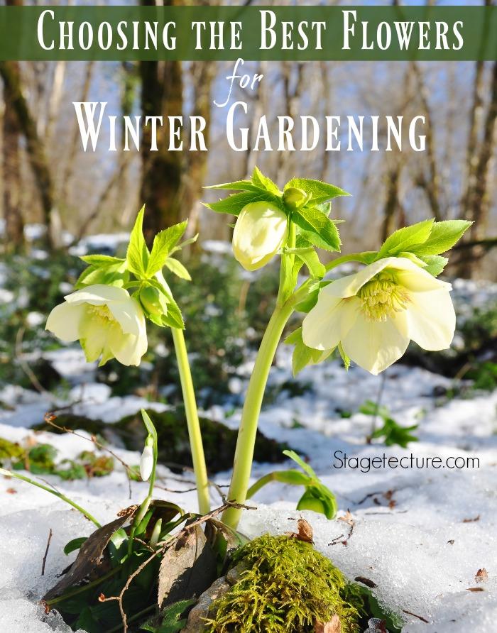 Winter Gardening The Best Winter Plants And Gardening Tips