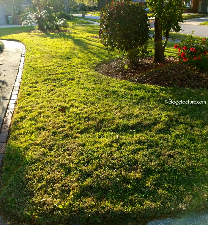 lawn care roundup lawns tips 1