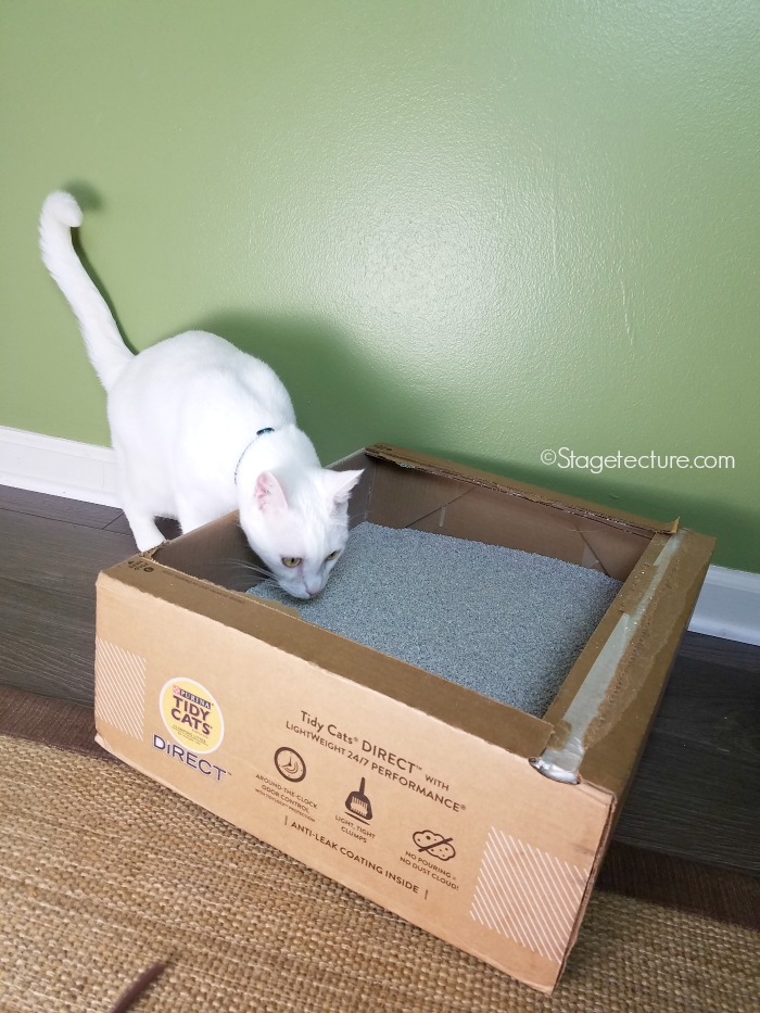 Snow Cat litter box Tidy Cats Direct Amazon